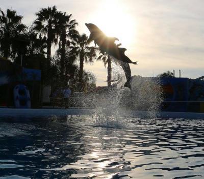 Show de Delfines