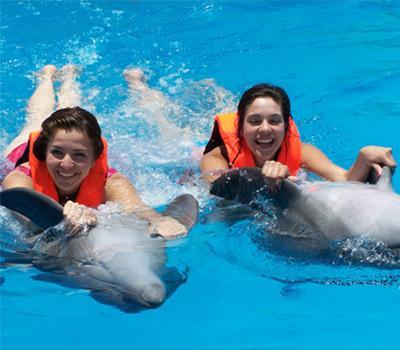 Delfines en Nuevo Vallarta Riviera Nayarit